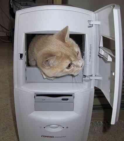 cat-in-computer.jpg