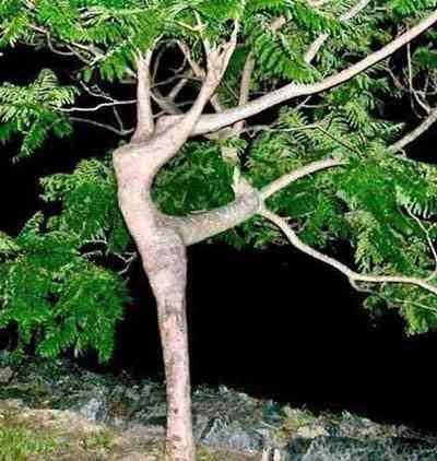 dancingtreexe3.jpg