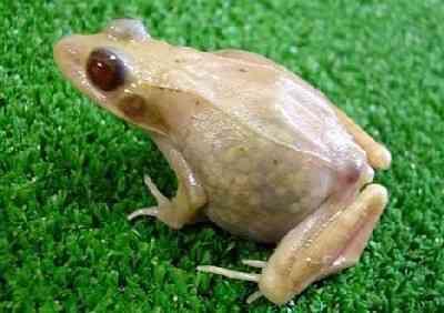 translucent_frog.jpg
