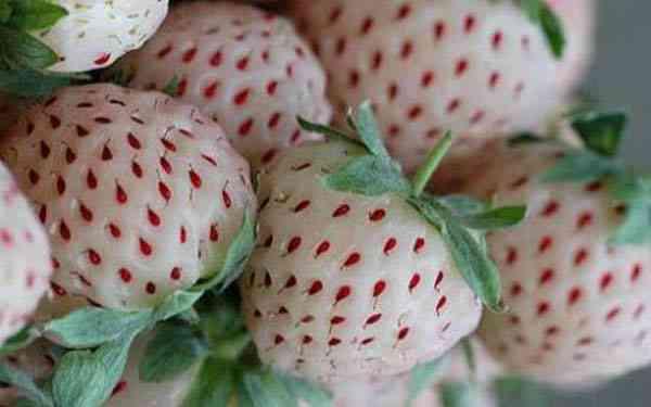 fresas blancas