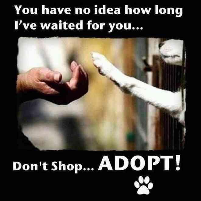 imagesdont shop adopt small