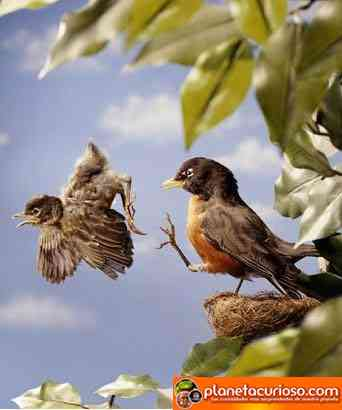 aprendiendo volar pajarito