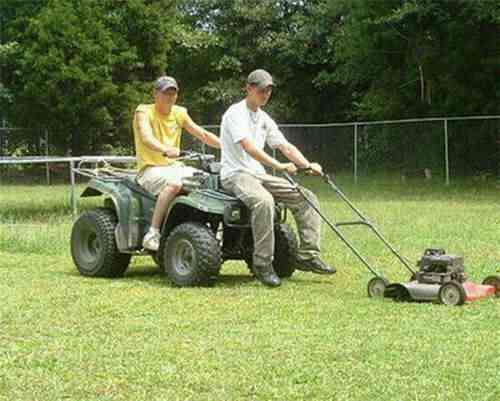 imagesgrass cutting