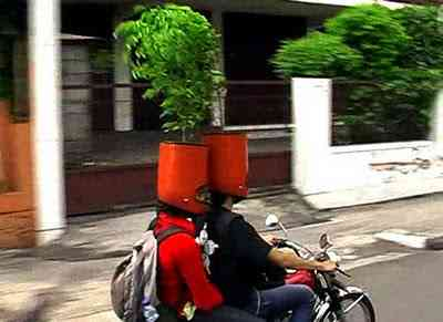 Potheads in Indonesia