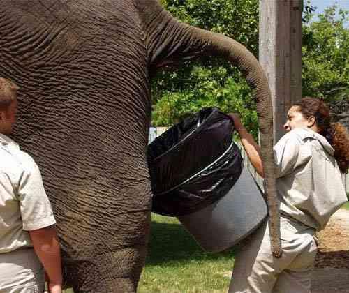 heces elefante