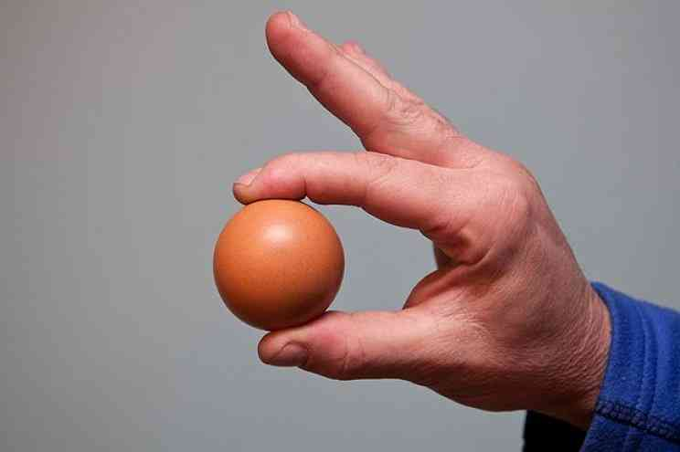huevo gallina redondo