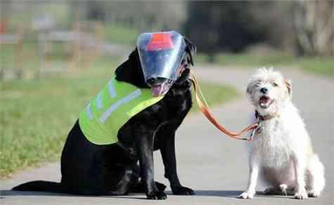 perro ciego guia