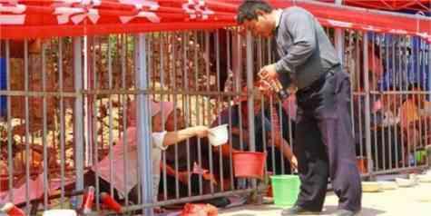 jaulas mendigos china