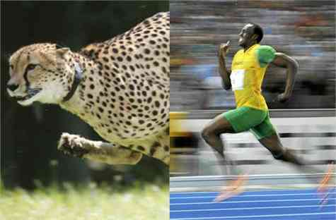 guepardo usain bolt