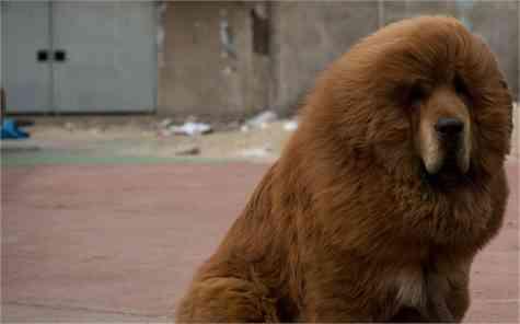 Zoológico perros leones
