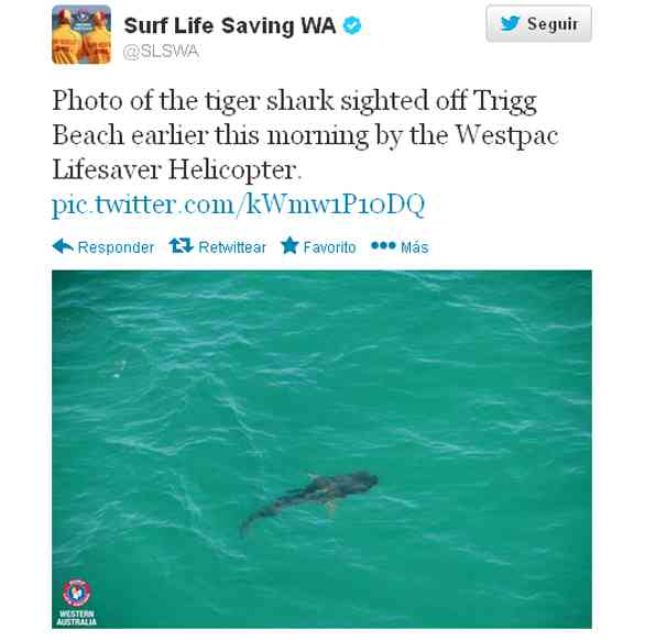 Australia Twitter tiburones