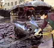 Las explosiones de ballenas